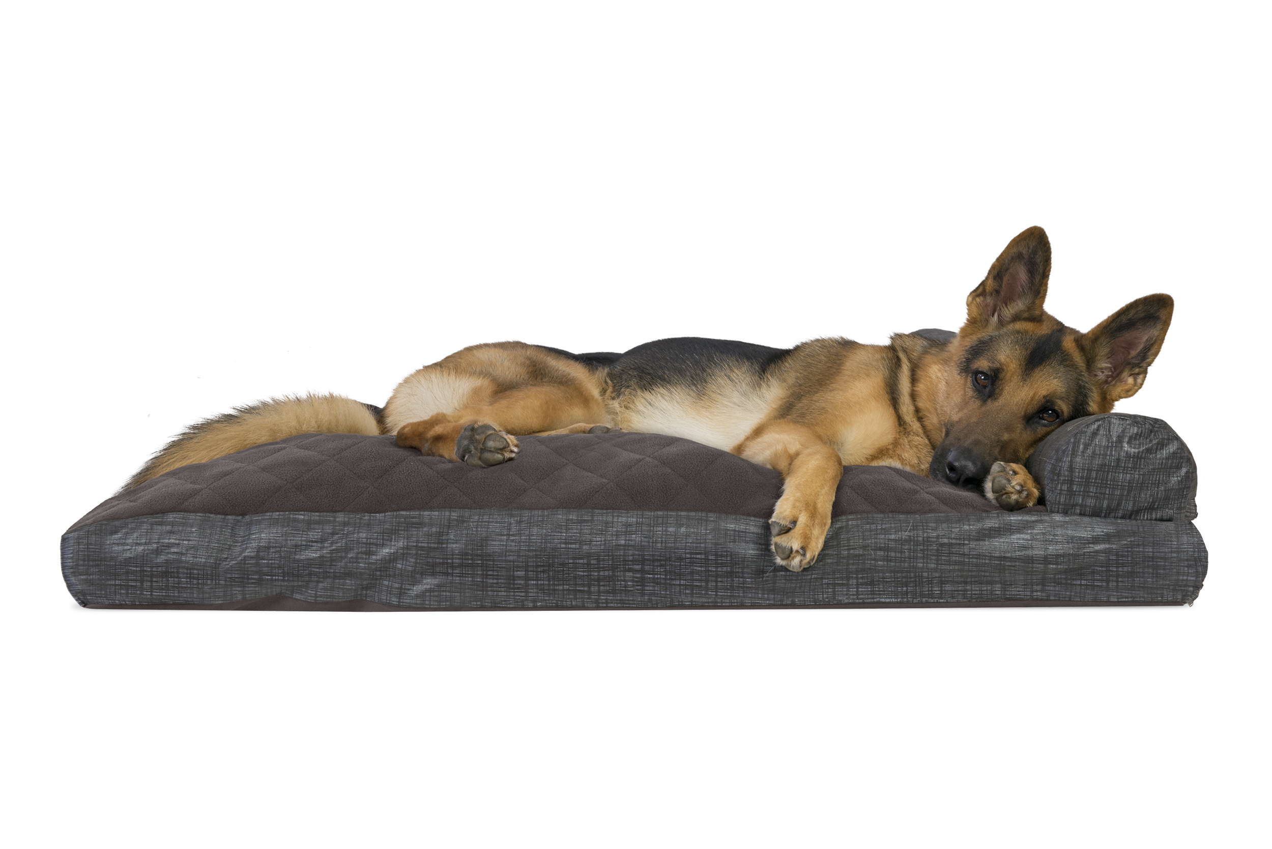 Dog Chaise Lounges Home Ideas