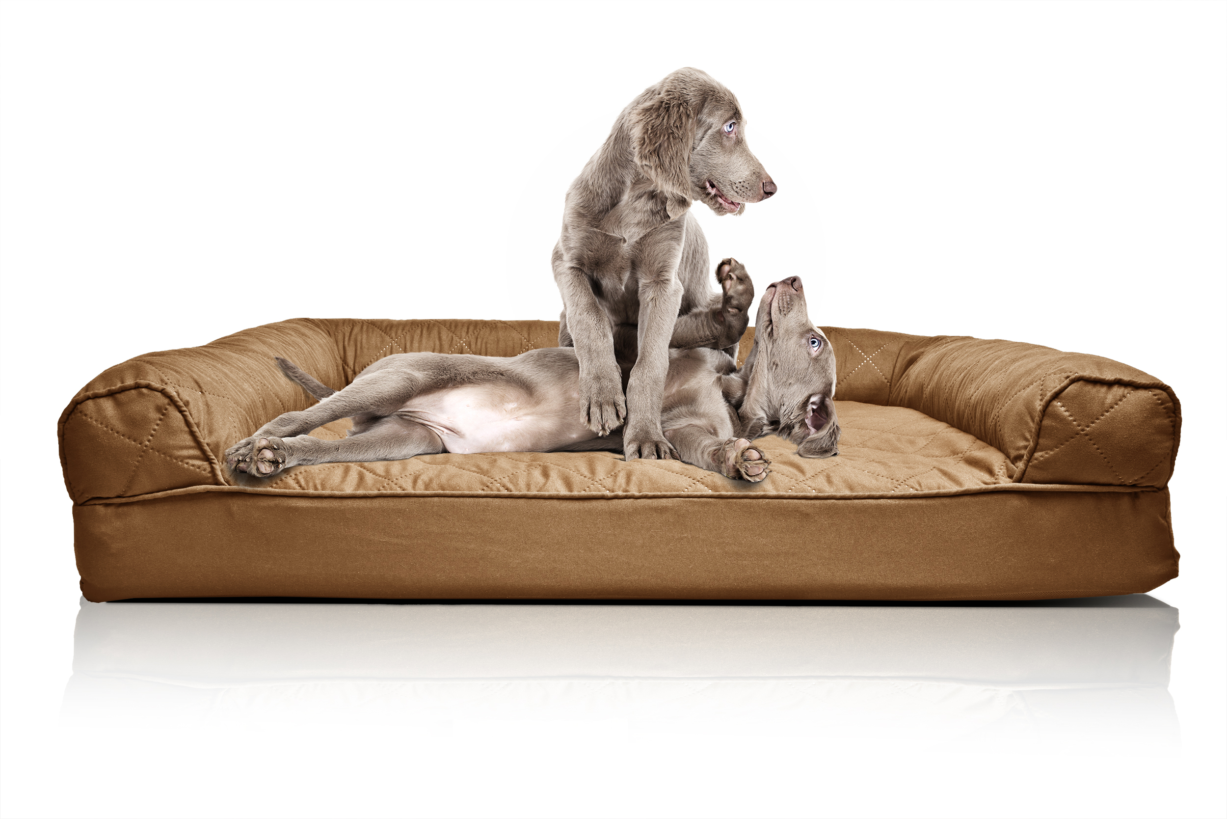 Beautiful sofa dog bed 57 modern sofa ideas with sofa dog for Sofa bed jogja