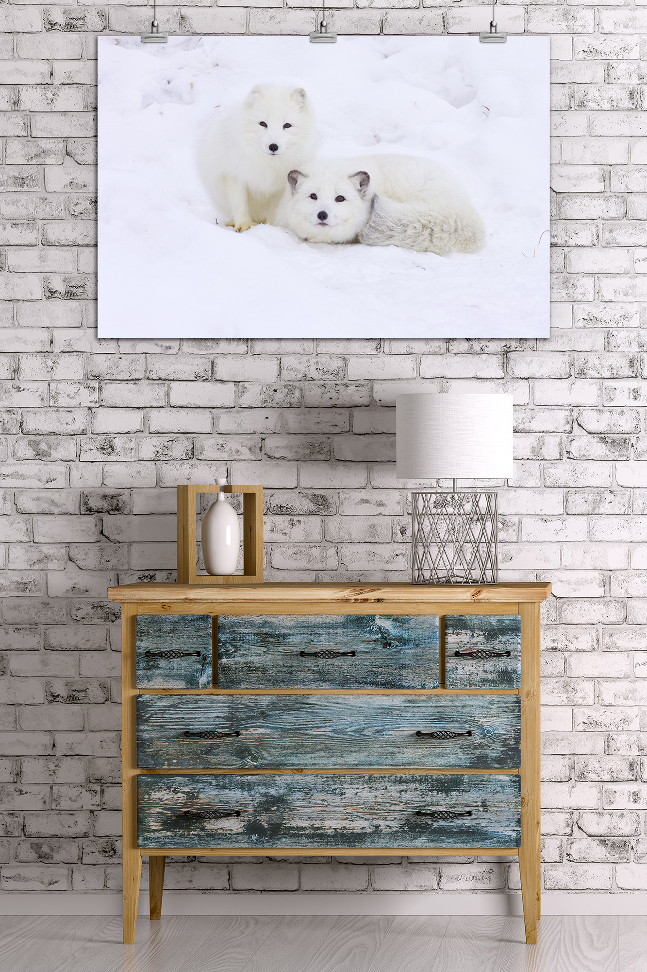 Arctic Fox Posters, Wood /& Metal Signs LP Photography