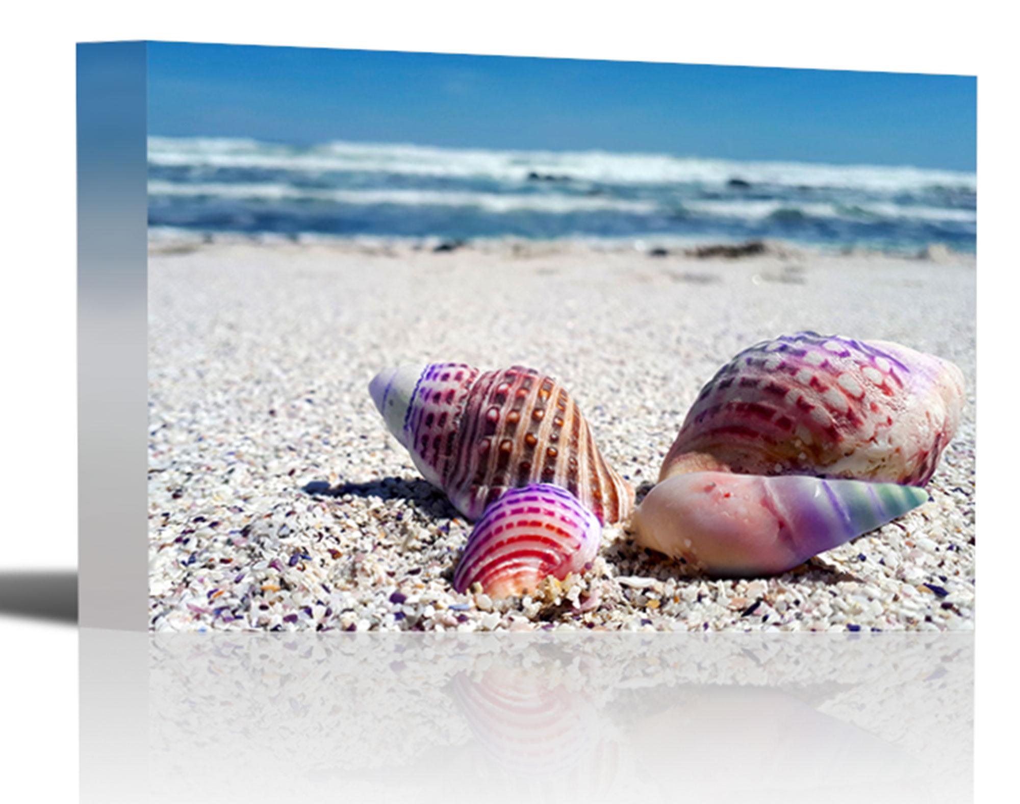 Sea Shells Tropical Ocean Beach Art Print Wall