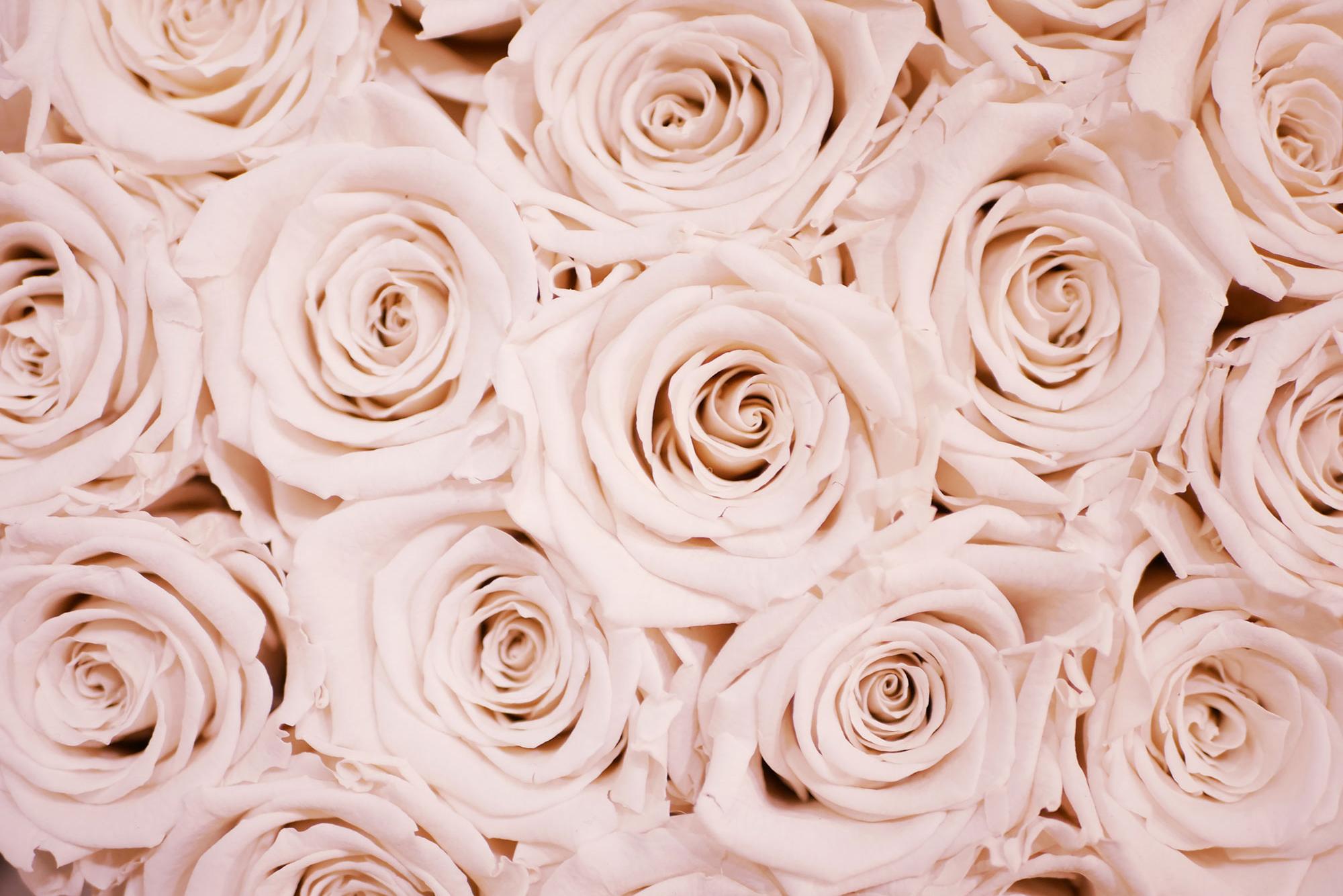 Pink Rose Flower Blooms Bouquet Art Print Wall Decor Image