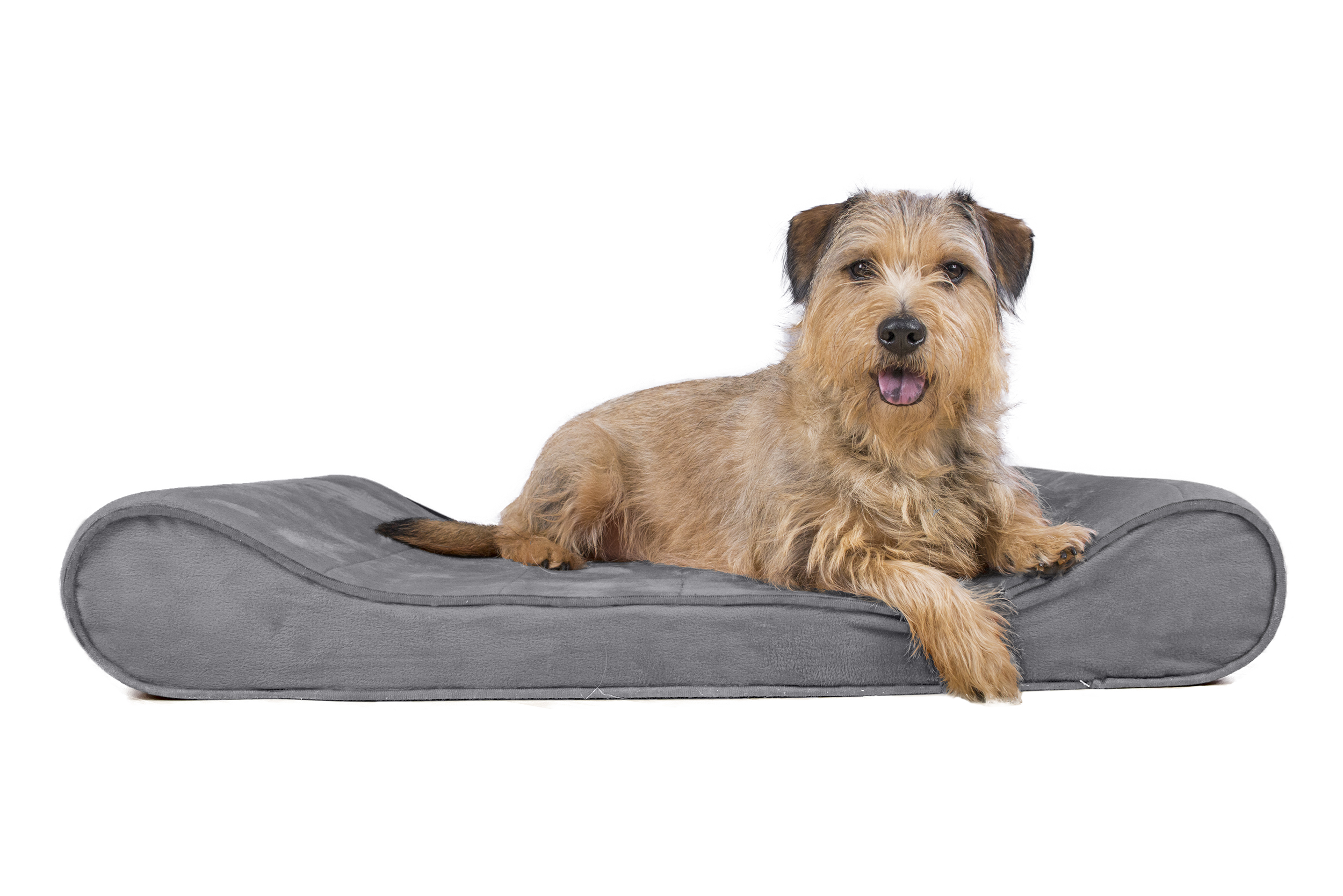 beds paw noten dog replacement bed cover top for korrectkritterscom l orthopedic animals