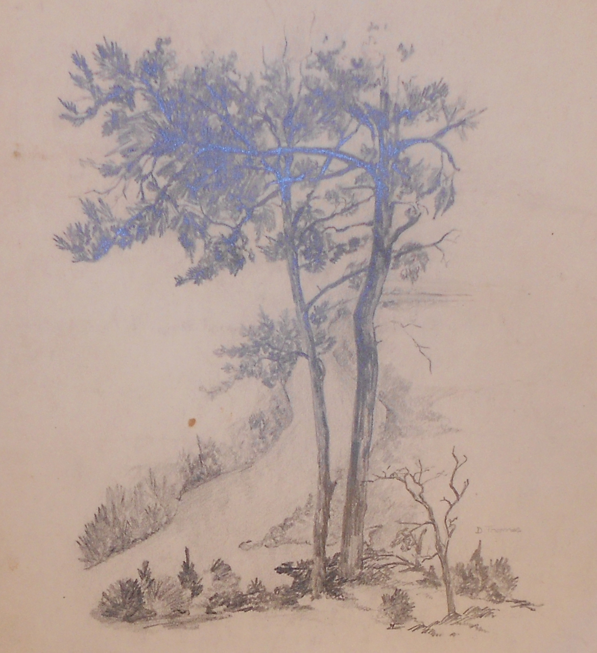 Details about vintage signed d thomas pencil drawing sketch of trees